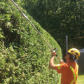 Tree Service Ajax Inc. (@treeserviceajxin) Avatar