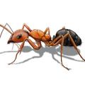 Best Ants Removal Brisbane (@antscontrolbrisbane) Avatar