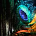 Lora Drasner (@drsklinegreen) Avatar