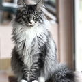@catwoman77 Avatar