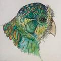 Nachtpapegaai (@midnight_parrot) Avatar