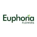 Euphoria Flowers (@euphoriaflowers) Avatar