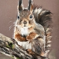 Nutty_squirrel (@nutty_squirrel) Avatar