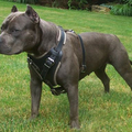 My dog training collar (@mydogtrainingcollar) Avatar