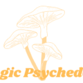 magicpsychedelic (@magicpsychedelic) Avatar