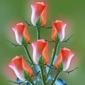 Rose Builders70 (@rosebuilders70) Avatar