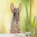 Rodent Control Adelaide (@adelaiderodentcontrol) Avatar