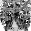Aniel Dominic  (@anieldominic) Avatar