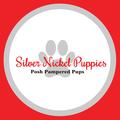 Silver Nickel Puppies (@silvernickelpuppies) Avatar