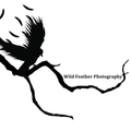 Wild Feather Photography (@wfp4me) Avatar