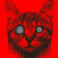 (@taipari) Avatar