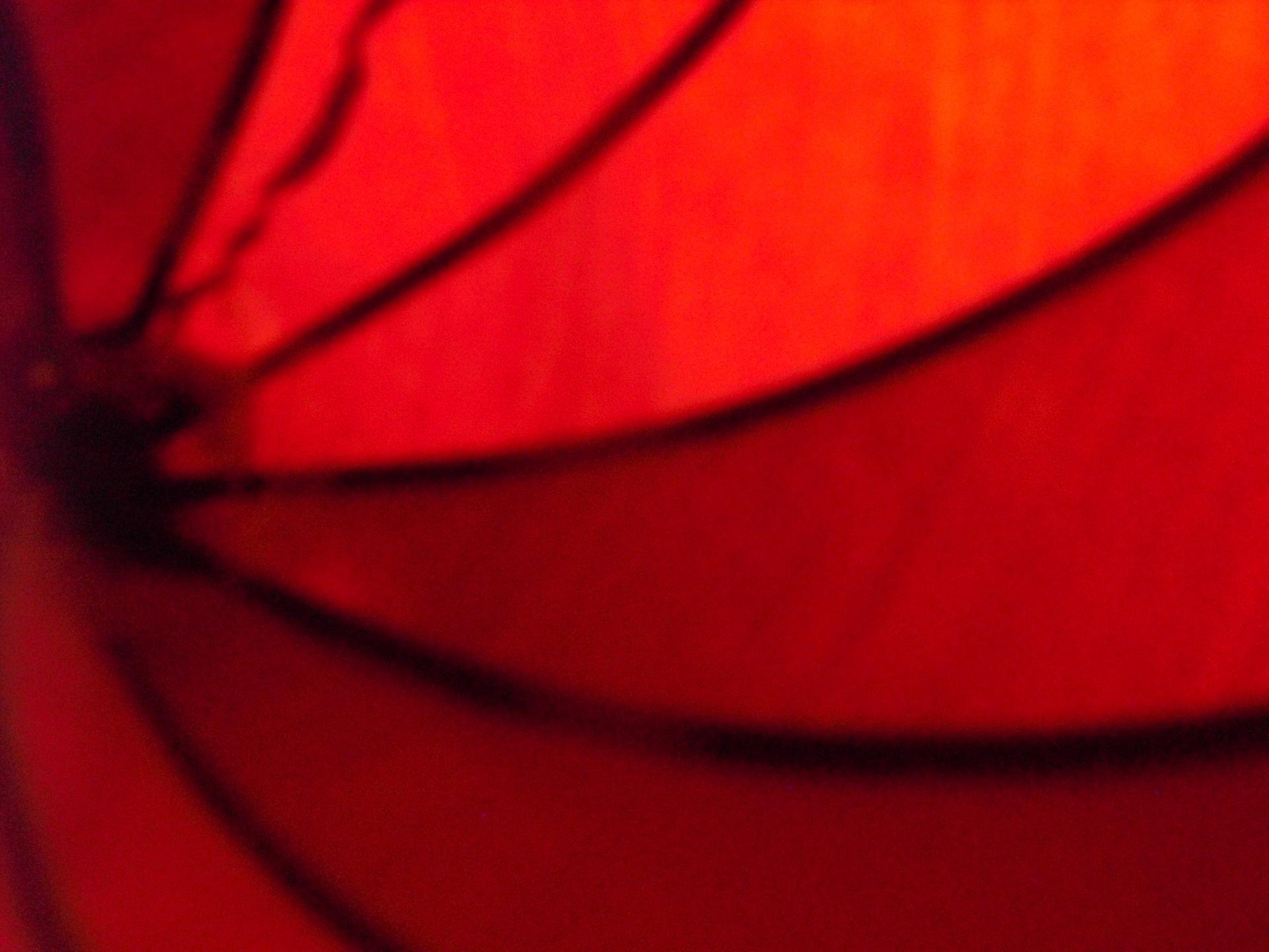 Scarlet (@scarlet_sima) Cover Image