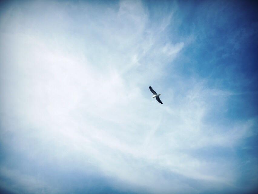 Pawlik Photography (@adampawlik) Cover Image