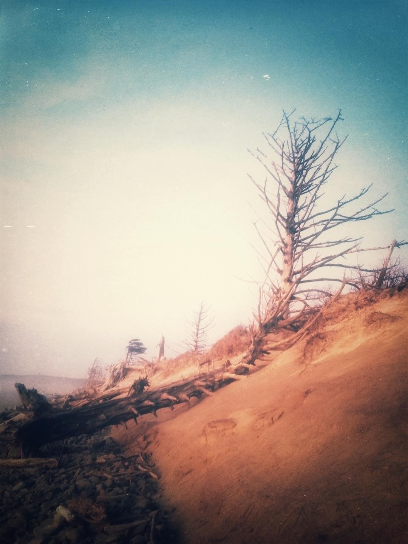 Woodland Shadow (@scissorpris) Cover Image
