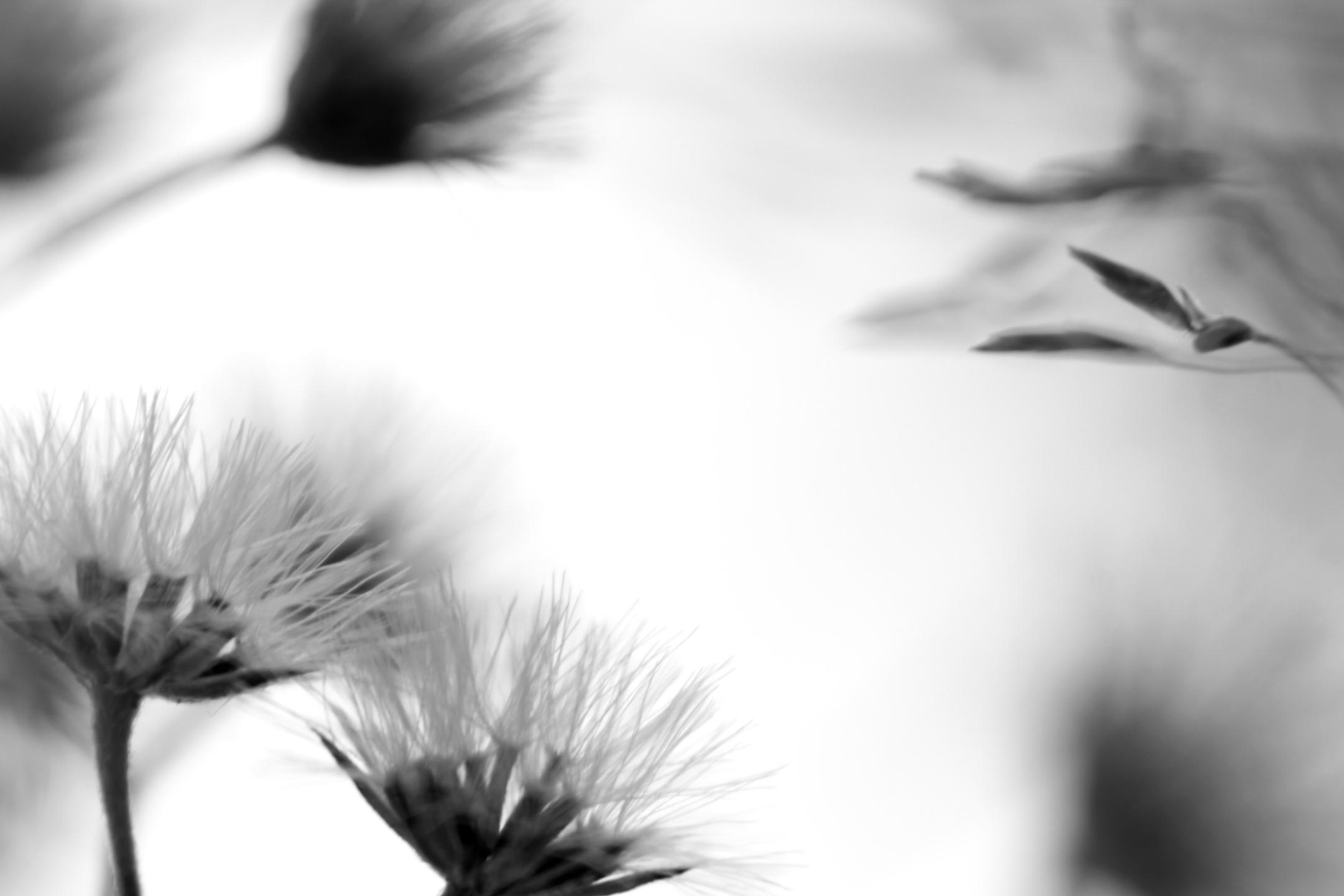 Carlota Reis (@kkreis) Cover Image