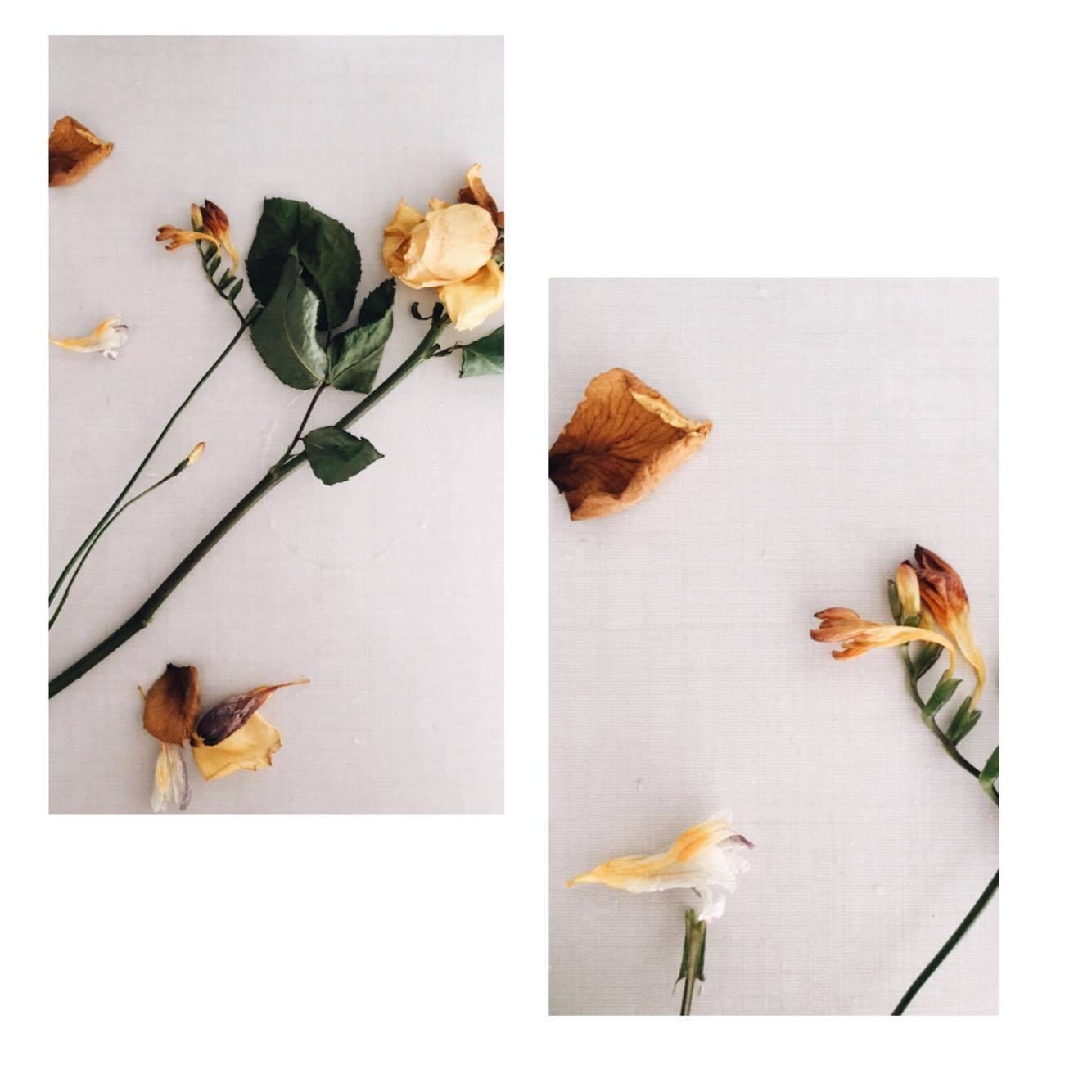 Yiota Dendrinou (@yio_dendrinou) Cover Image