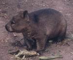 Pigbaby (@pigbaby) Cover Image