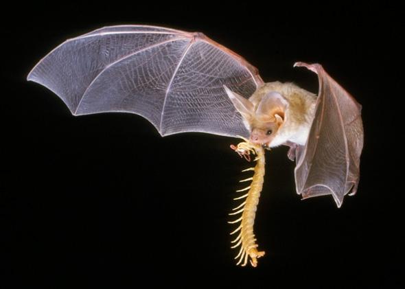 The Bat (@die_fledermaus) Cover Image