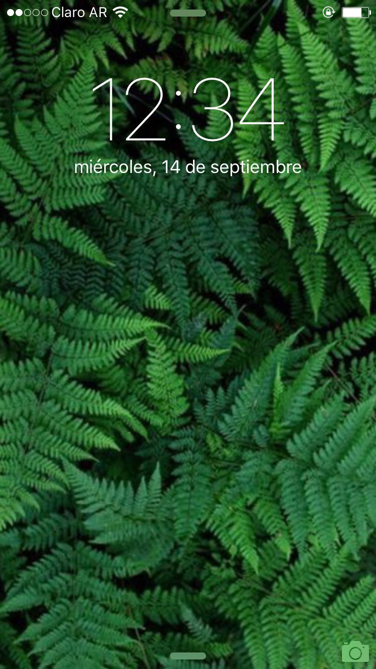 Agustina Tesio (@agustesio) Cover Image