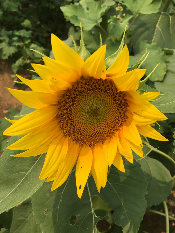 sunflowerjen (@sunflower_jen) Cover Image
