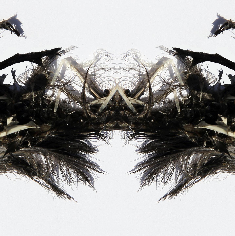 liz solo (@lizsolo) Cover Image