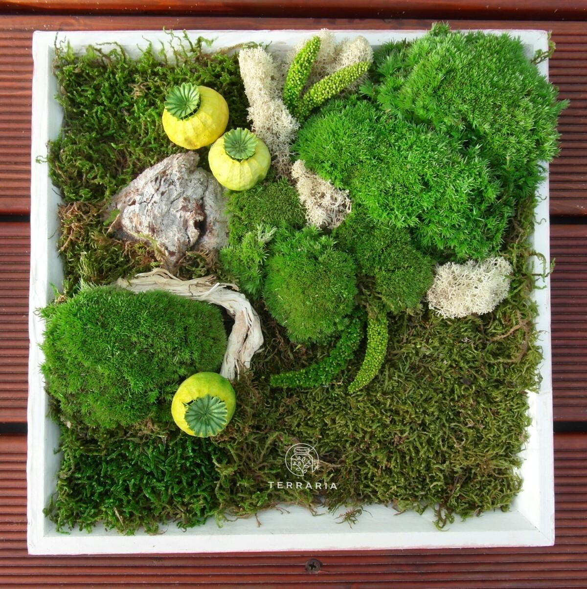 Terraria.  Bucurie Vie  (@terrariaplants) Cover Image