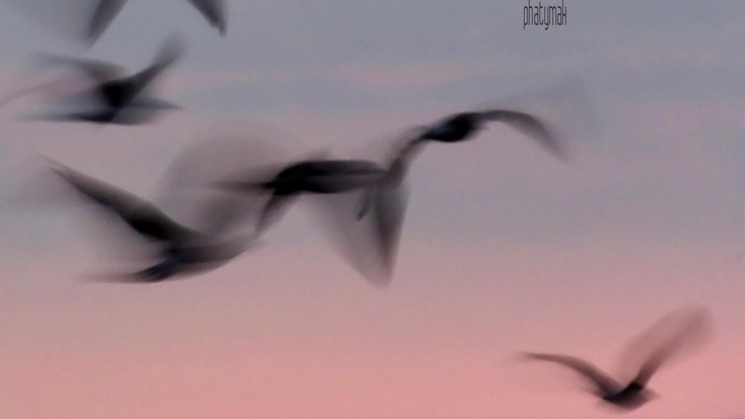 (@phatymak) Cover Image