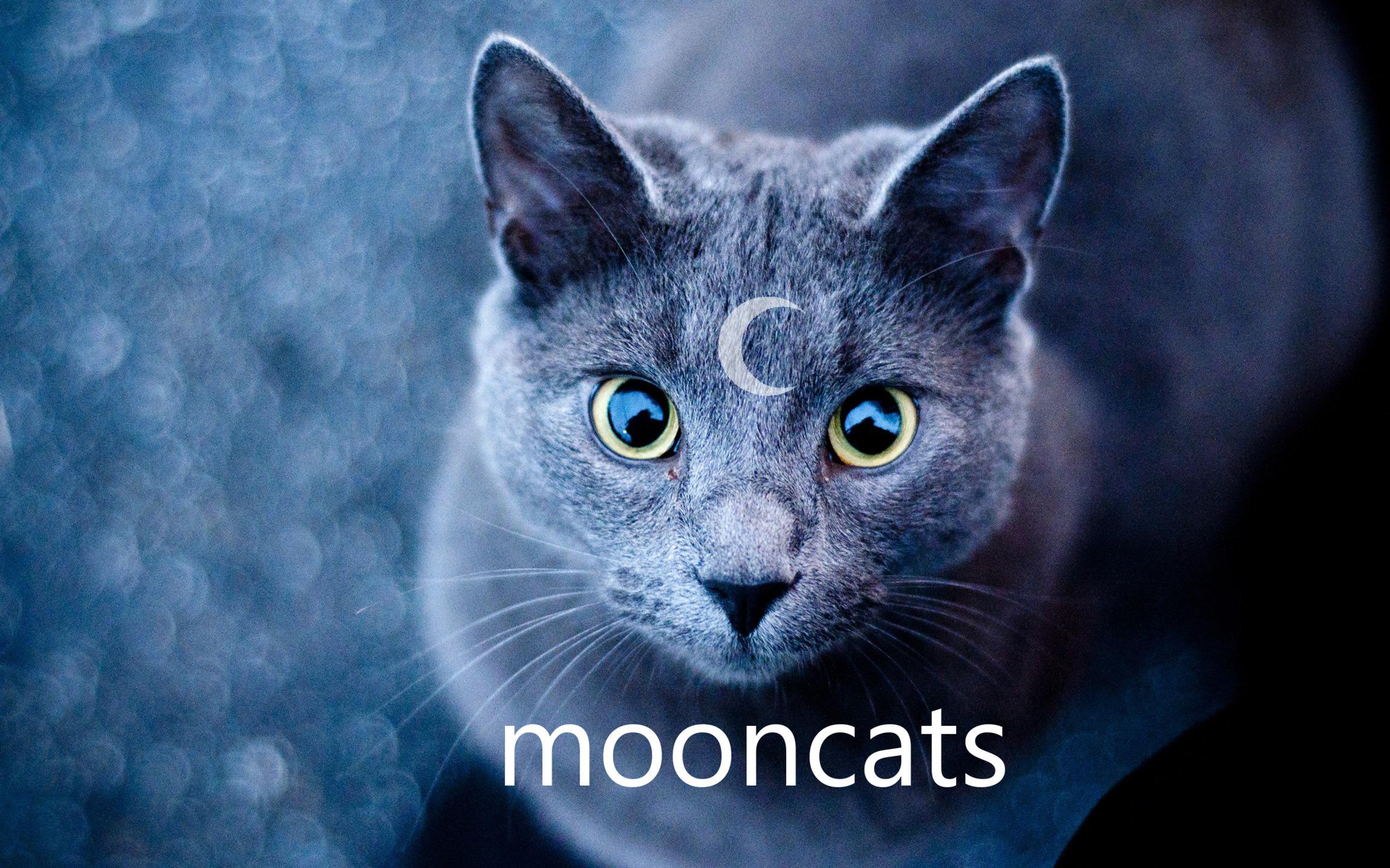 The Mooncats (@mooncats) Cover Image