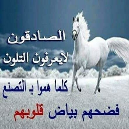 @mahamedalhawty Cover Image