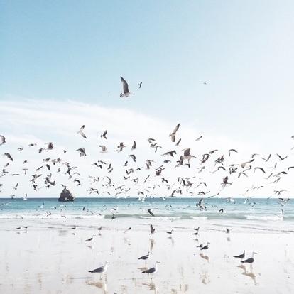 sara birds (@sarabirds) Cover Image