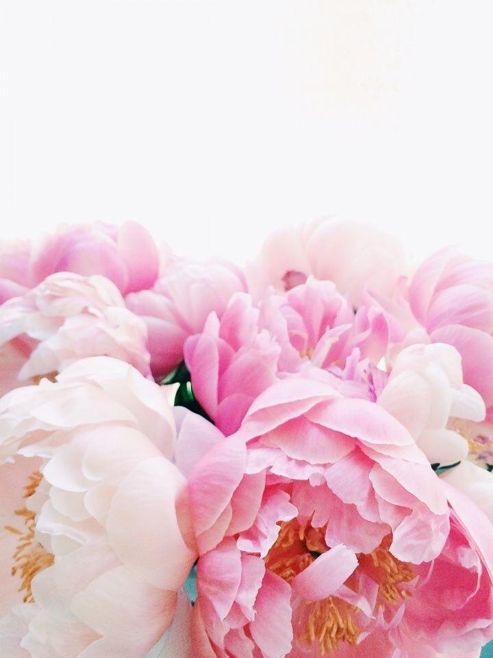 Besos flores y vermut (@besosfloresyvermut) Cover Image