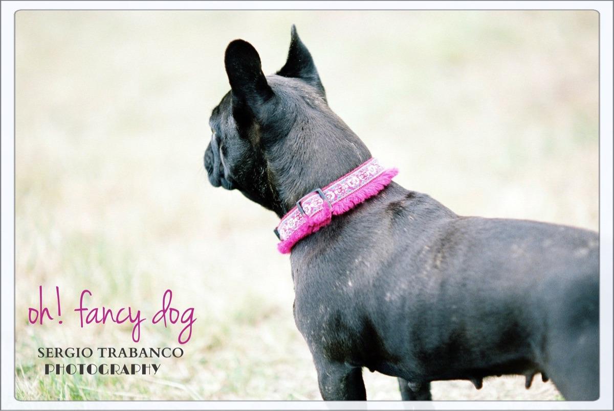 oh! fancy dog® (@ohfancydog) Cover Image