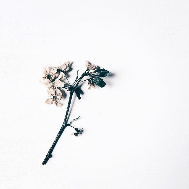 ana mol (@ana_mol) Cover Image