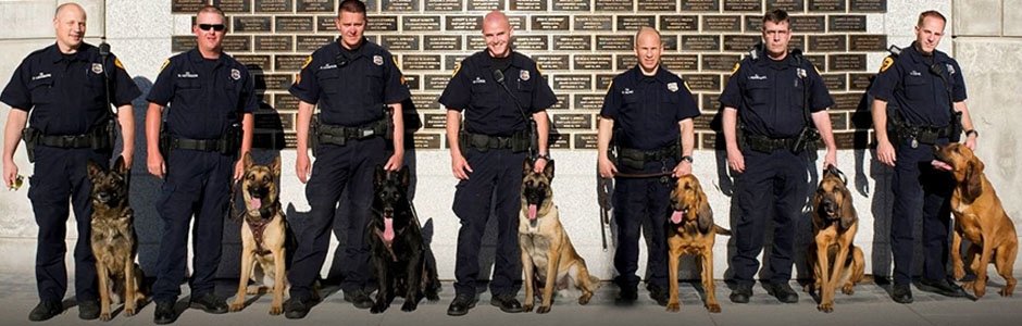 Police K9 Dogs For Sale (@policek9dogsforsale) Cover Image
