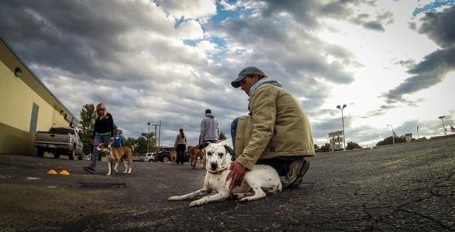Joey Luke's Dog Training (@joeylukesdogtraining) Cover Image