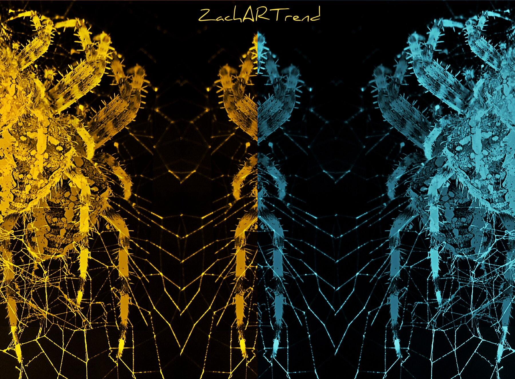 Rita Zachar (@zachartrend) Cover Image
