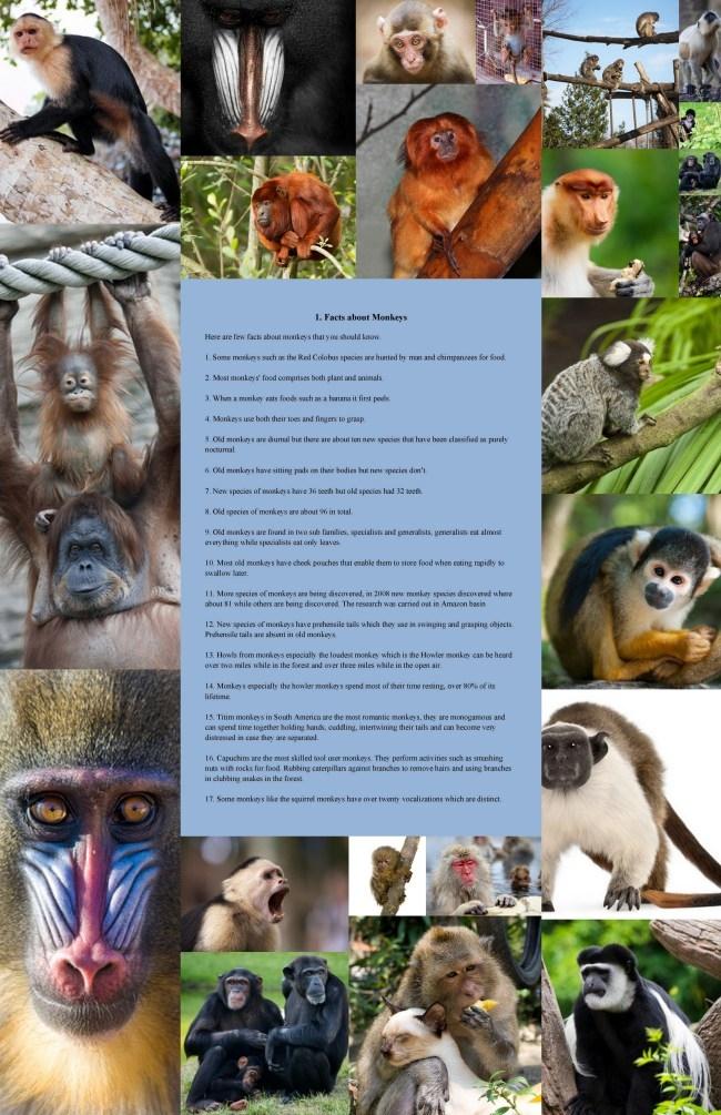 animalbooks (@mendonbooks) Cover Image