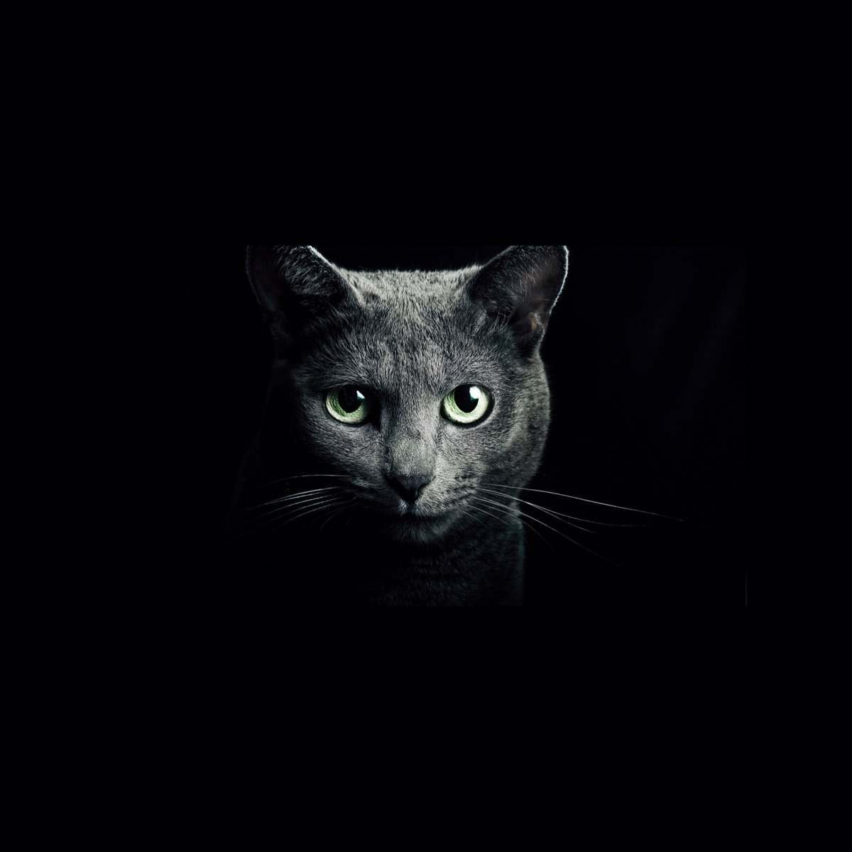 chandra (@ijustwannakillyou) Cover Image