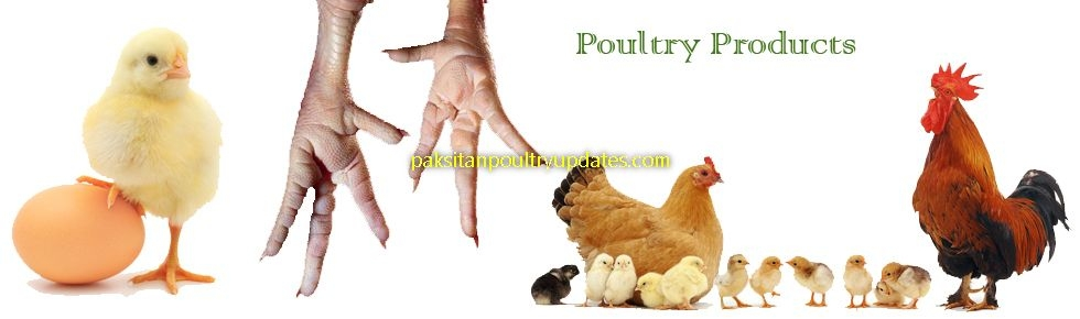 pakistan poultry updates (@pakistanpoultryupdates) Cover Image