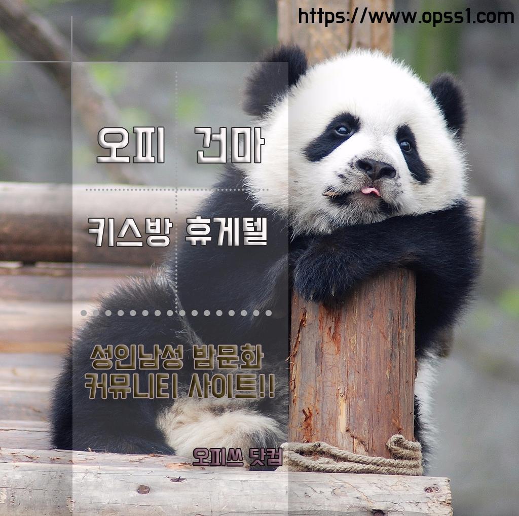 동대문오피『오피쓰』 (@dongdaemunopss) Cover Image