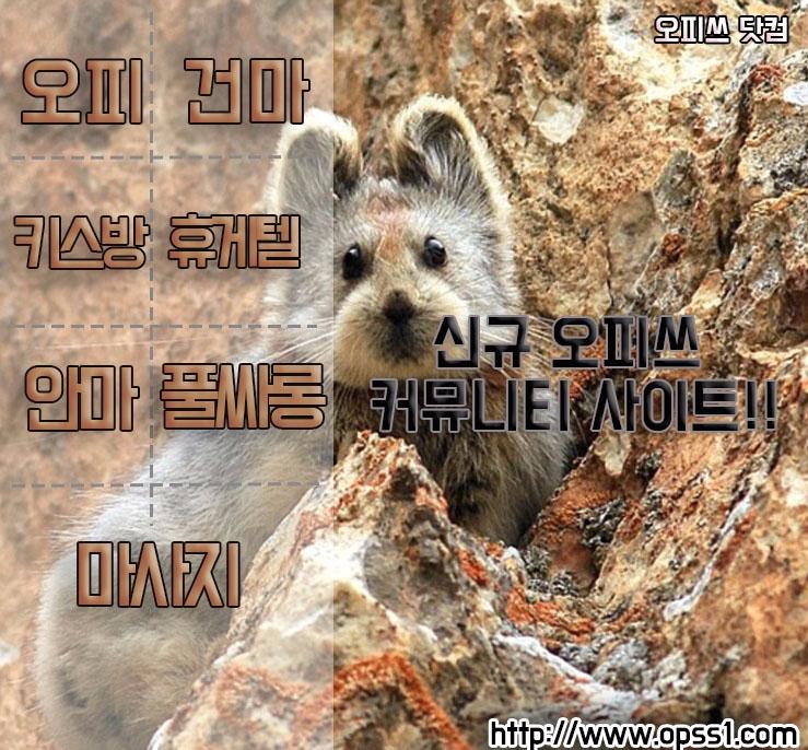 [경산오피]오피쓰 (@kyungsanopss) Cover Image