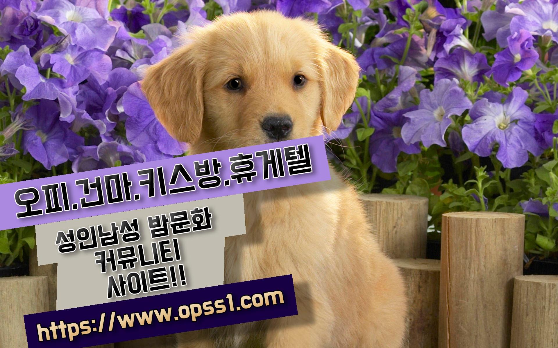 {서초오피}{오피쓰} (@seochoopss) Cover Image