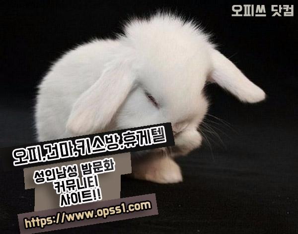 선정릉오피[오피쓰] (@seonjeongleungopss) Cover Image