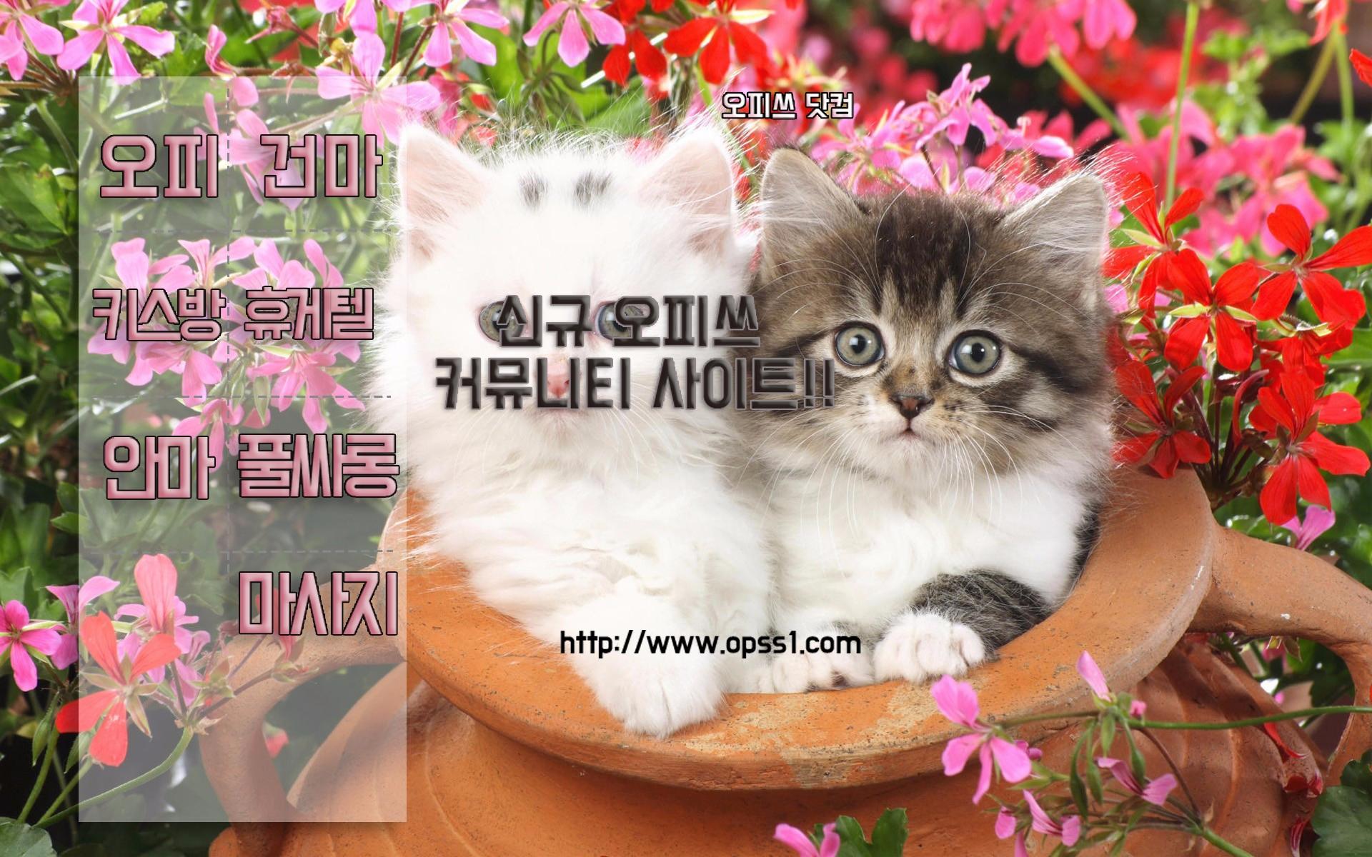 광진건마 오피쓰 (@gwangjinop) Cover Image