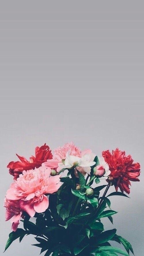 Emilie Holler (@emilieholler) Cover Image