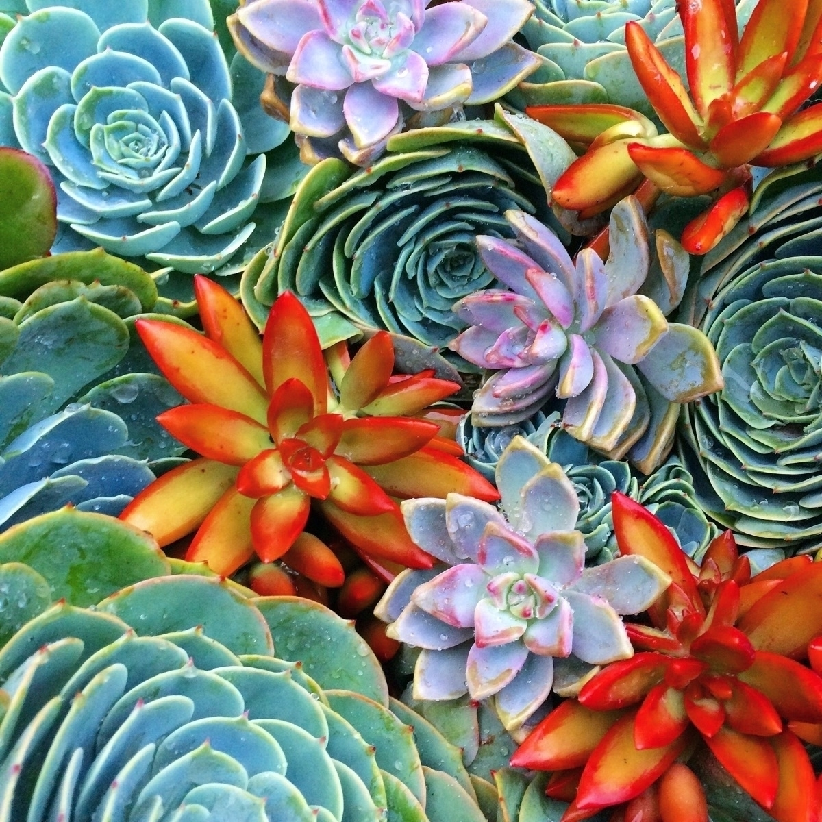 @queenofsucculents Cover Image
