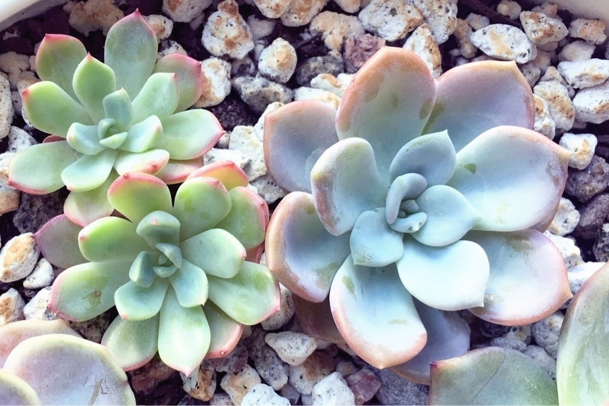 blueskysucculents (@blueskysucculents) Cover Image