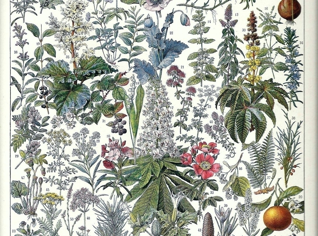 Ello Herbalists (@elloherbalists) Cover Image