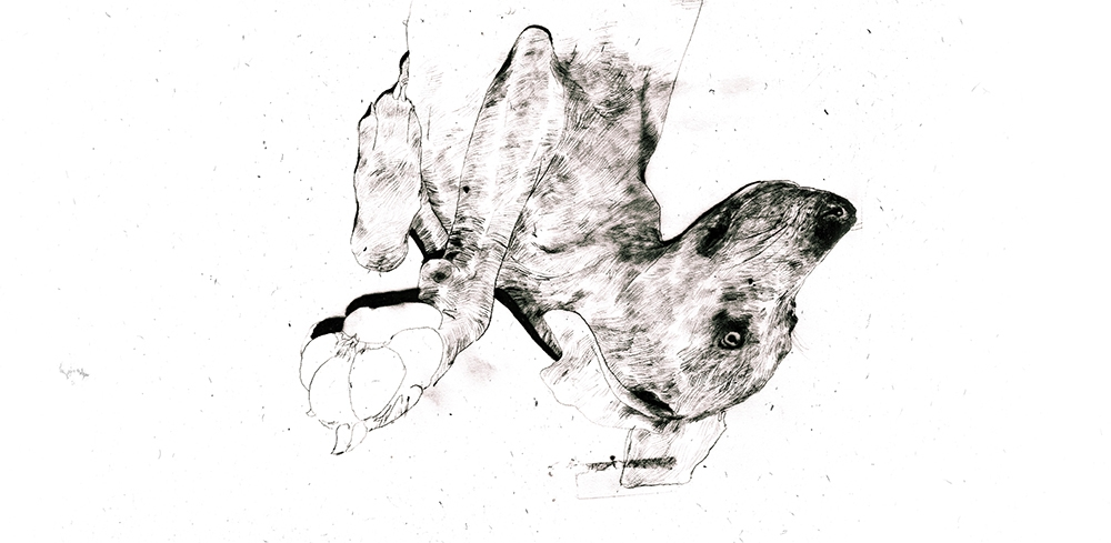 Anka  (@dogscanbark) Cover Image