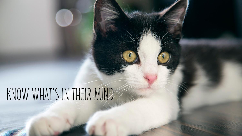 Meow Tee (@meowtee) Cover Image